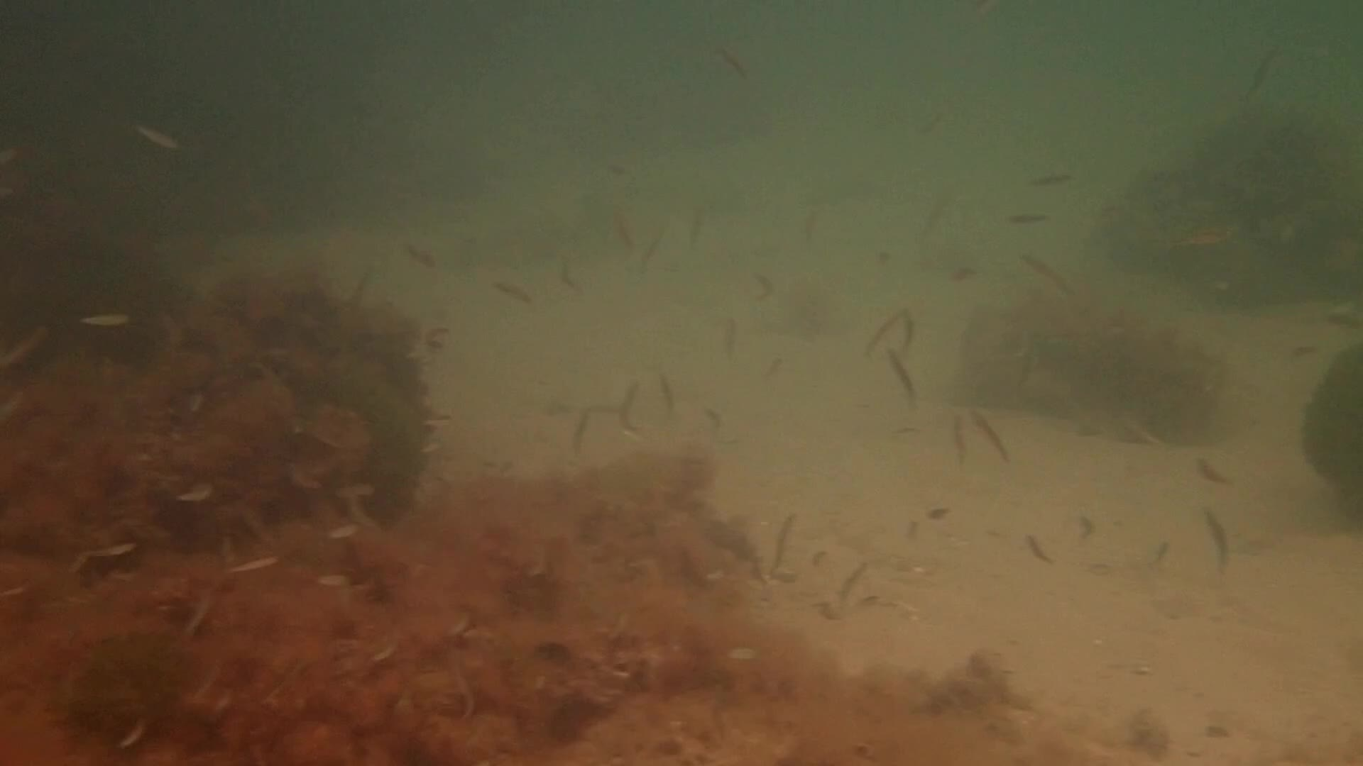 fish swarm mp4 ns